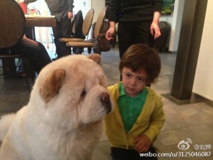 刘烨新浪微博晒出自己儿子诺一和大狗狗