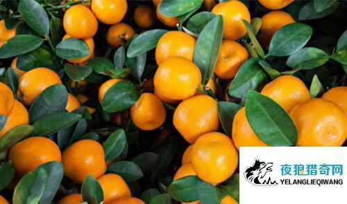 吃橘子竟全身变黄 白皙美女变黄脸婆真相十分惊人